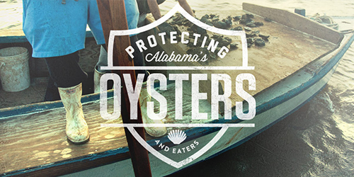 protectingaloysters